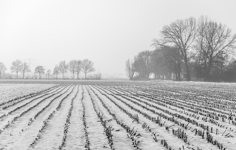 Tegoroczne uprawy zagrożone przez przymrozki i opady śniegu