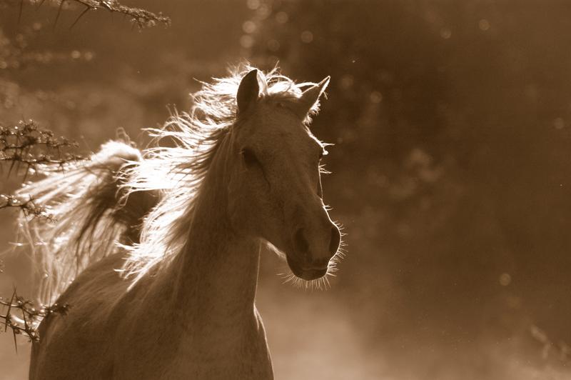 89-latek domaga się zwrotu pieniędzy za konia, którego odebrano rodzinie w… 1939 roku