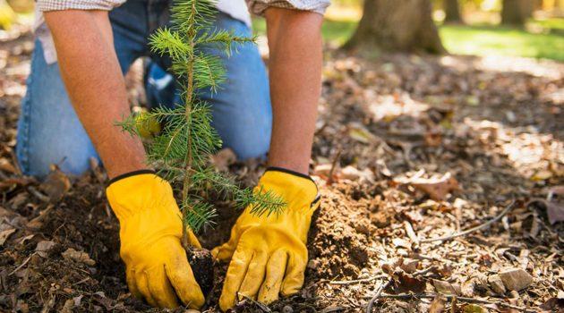 W Detroit posadzą 10 tysięcy drzew
