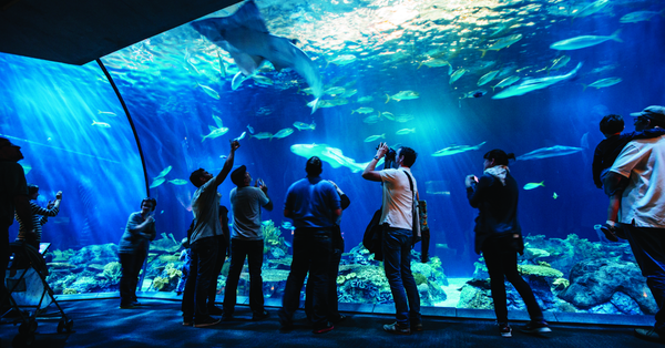 Darmowy wstęp dla mieszkańców Illinois do Shed Aquarium