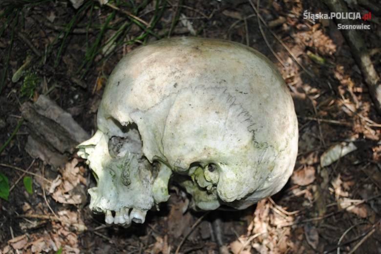 Czaszka znaleziona w lesie w Sosnowcu należy do zaginionego 41-latka