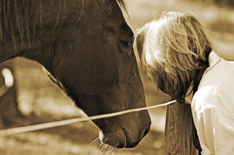 Niemal 300 tysięcy złotych na wykup koni przeznaczonych na rzeź