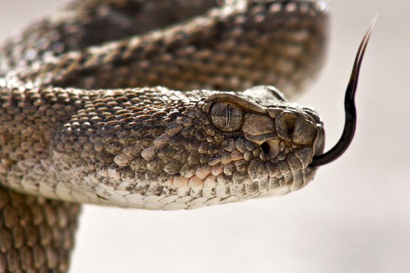 Leciał z wężem w walizce i nic o tym nie wiedział