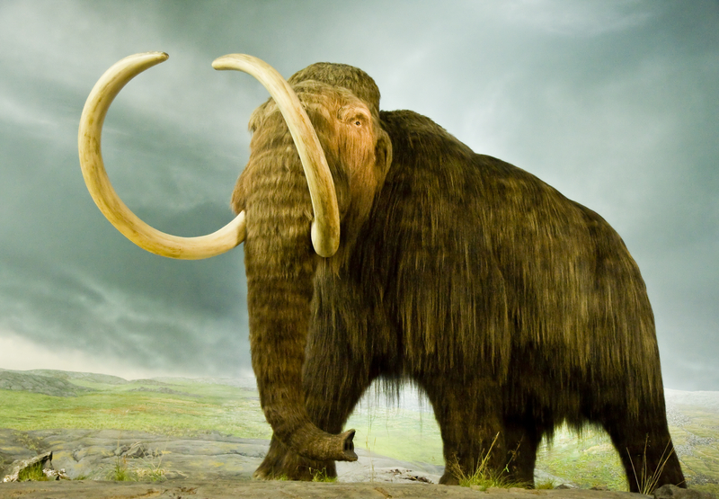 Pies wykopał ząb mamuta sprzed 13 tys. lat