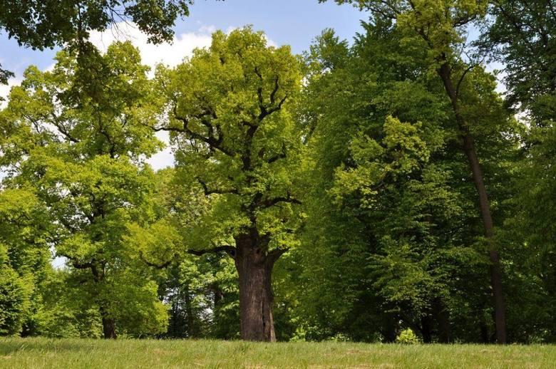 Wycięli drzewa, żeby mieć lepszy widok. Zapłacą 360 tys. dolarów kary