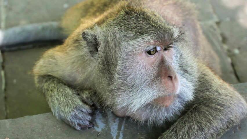 Uniwersytet dostał wezwanie do sądu w związku ze śmiercią małpy w laboratorium