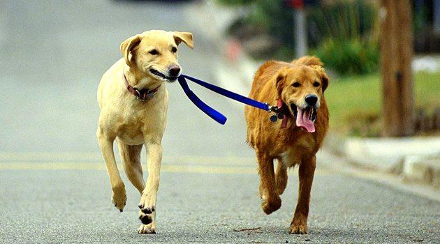 136 psów uratowanych z domu w Kalifornii