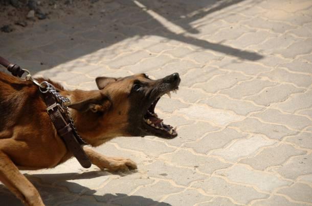 Koszmarny atak psa. Dziecku założono tysiąc szwów
