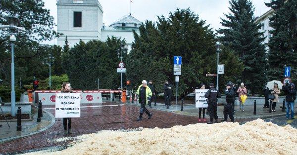 Warszawa: protest Greenpeace przeciw wycince drzew
