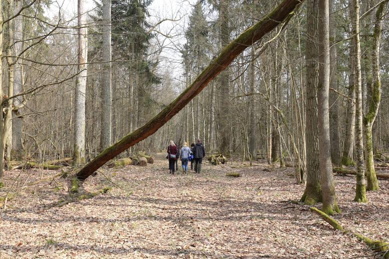 """Rzecznik generalny Trybunału Sprawiedliwości UE: """"Wycinka drzew w Puszczy Białowieskiej była nielegalna"""""""
