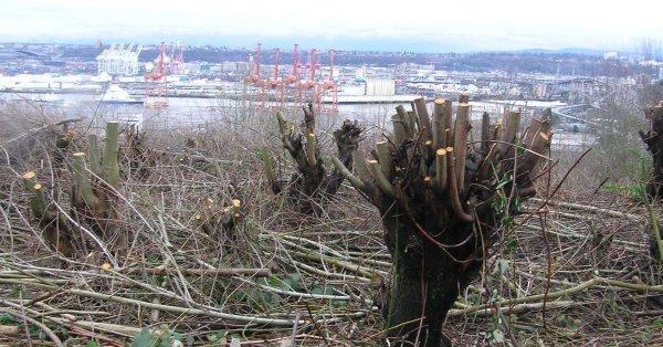 Wycięli drzewa, żeby mieć lepszy widok. Zapłacą 440 tys. dolarów