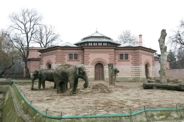 Słonie rozstrzelane we wrocławskim zoo w czasie wojny