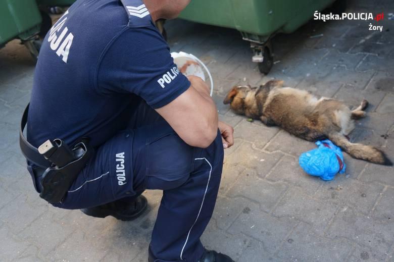 Policja szuka zwyrodnialca, który zakleił psu pysk i wrzucił zwierzę do pojemnika na ubrania