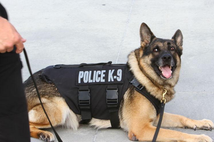 Będą wyższe kary za zabicie psa policyjnego na Florydzie
