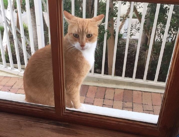 Dzikie koty dobre dla mieszkańców miast. WYWIAD z rzeczniczką poznańskiego schroniska dla zwierząt