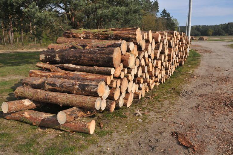 Mieszkańcy Michigan mogą przez weekend za darmo pobierać drewno z lasów