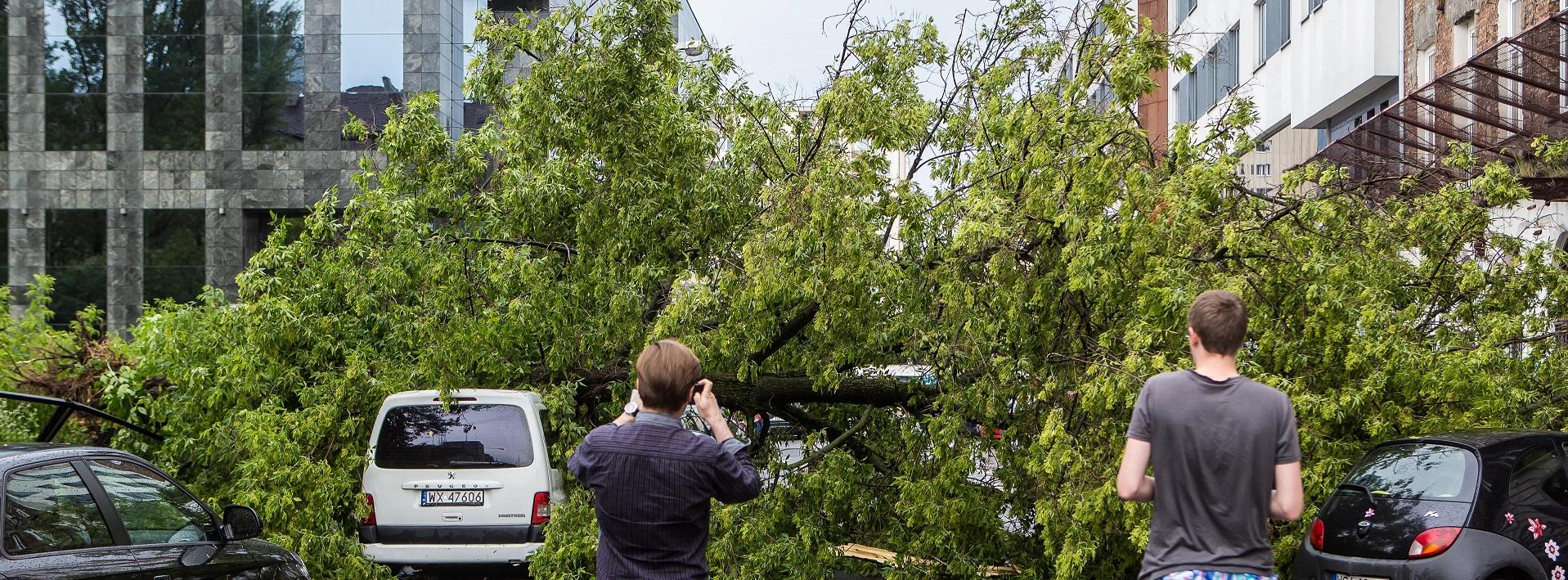 Trwa usuwanie skutków burz, które wczoraj i w nocy przeszły nad Polską