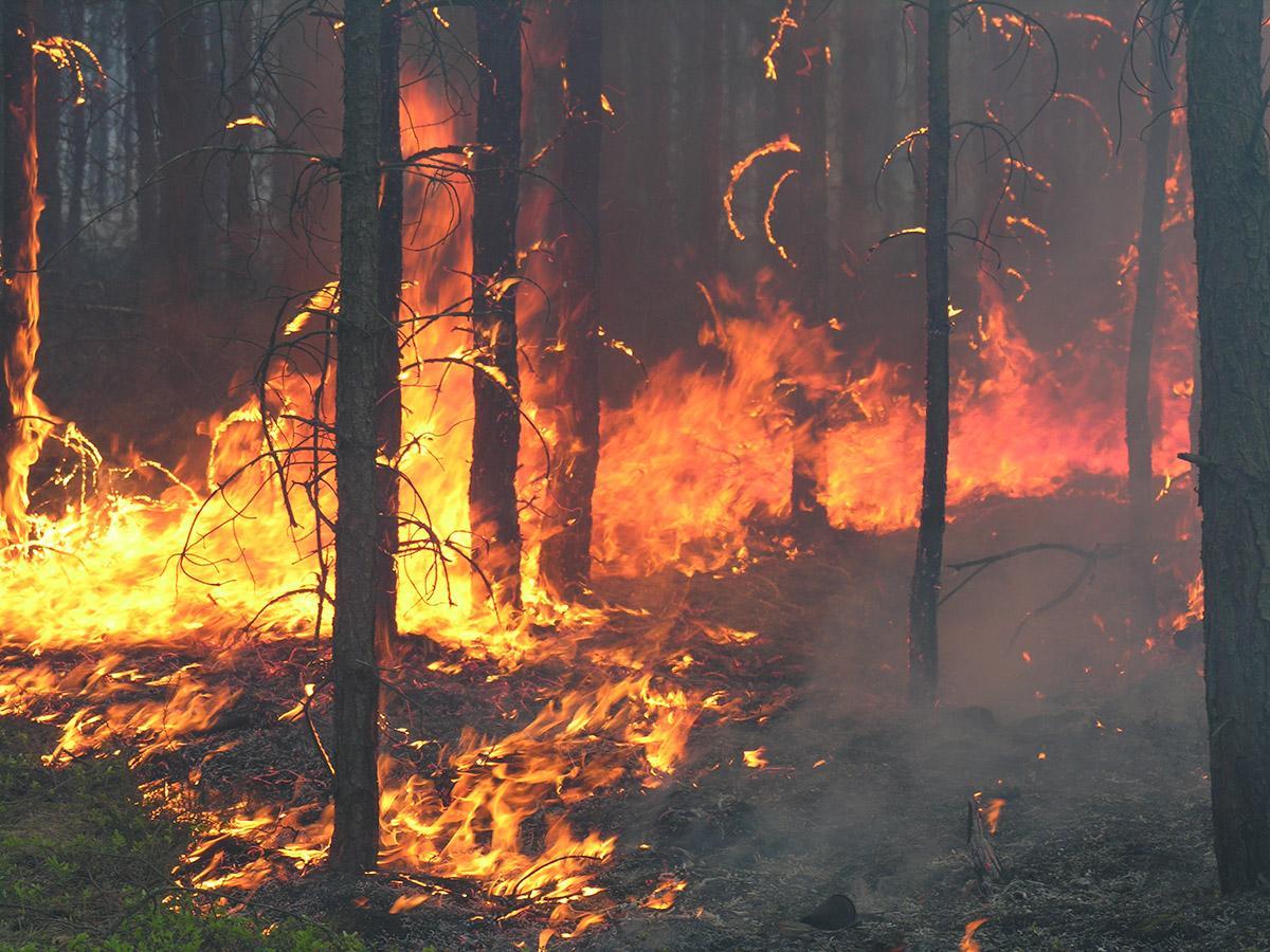 Autostrada w Kalifornii została tymczasowo zamknięta z powodu pożaru lasu