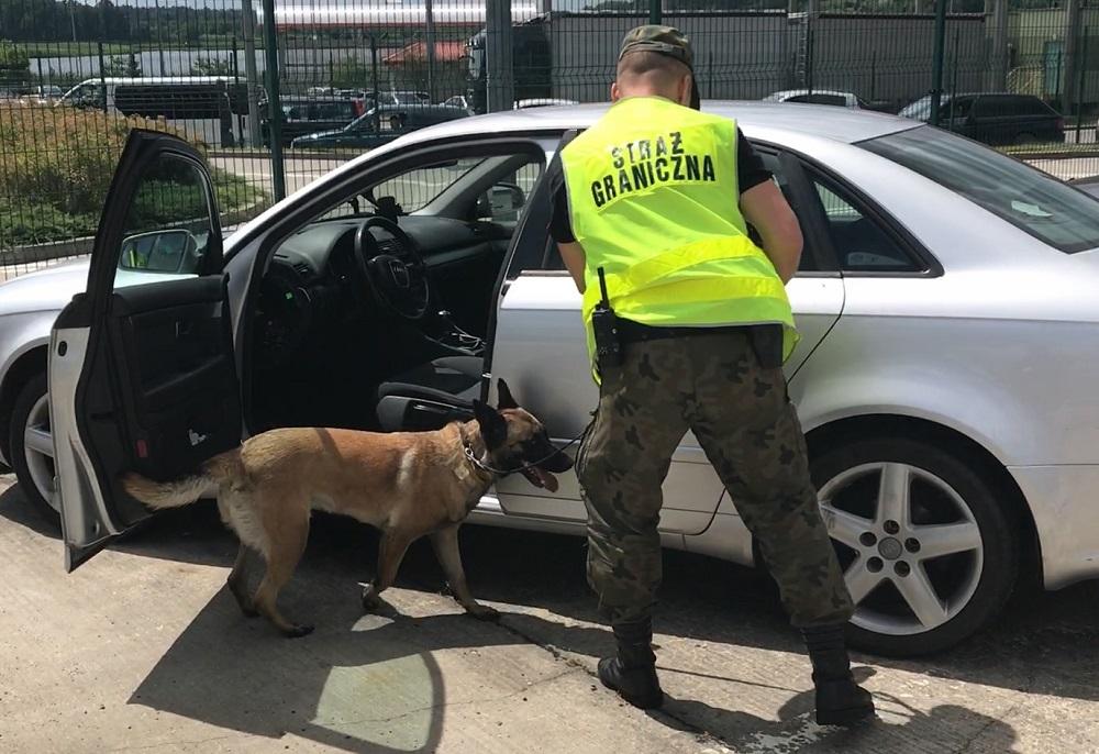 Pies  wywęszył haszysz o wartości prawie 2 mln zł