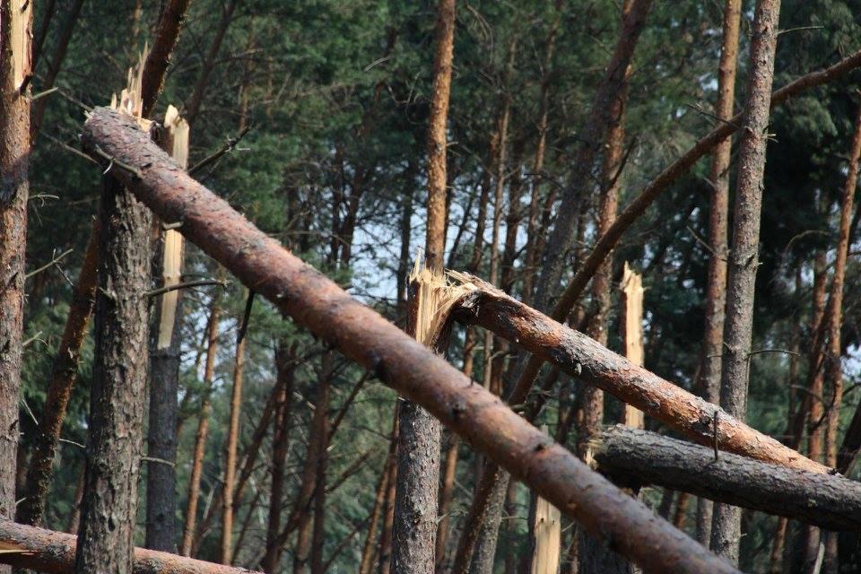 Lasy Państwowe podsumowują straty po ubiegłorocznych nawałnicach