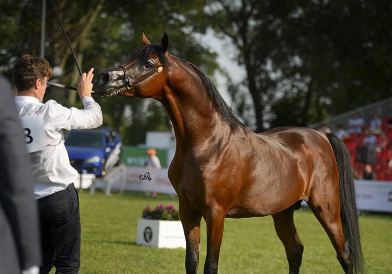 Po aukcji w Janowie Podlaskim: na 25 koni wystawionych na sprzedaż w aukcji Pride of Poland zostało sprzedanych zaledwie sześć