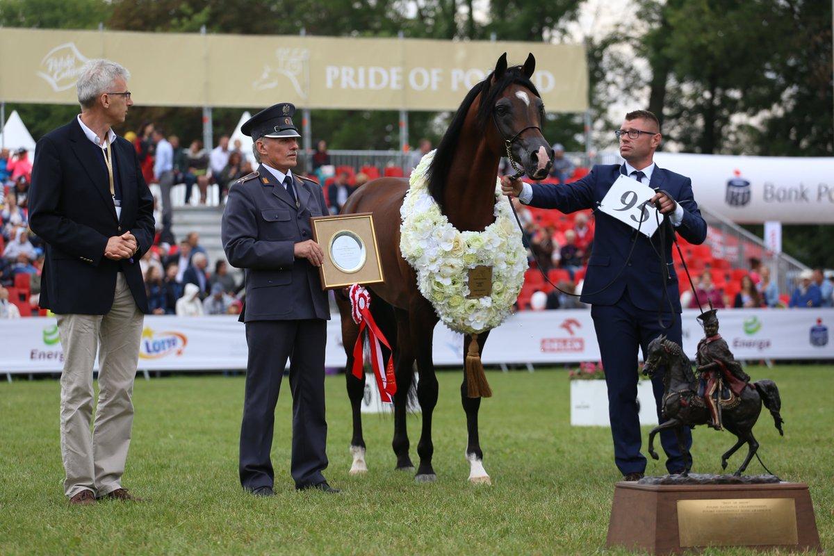Janów Podl. – najlepszy koń arabski