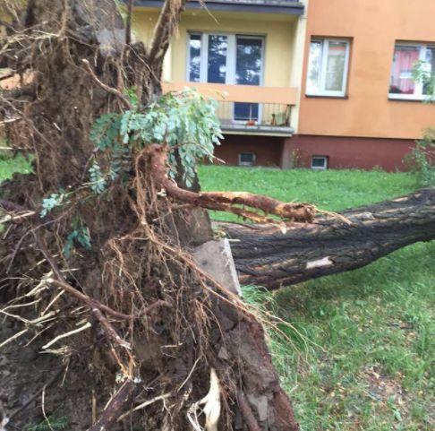 Czwartkowa burza w Zabrzu: Powalone drzewa i uszkodzone dachy