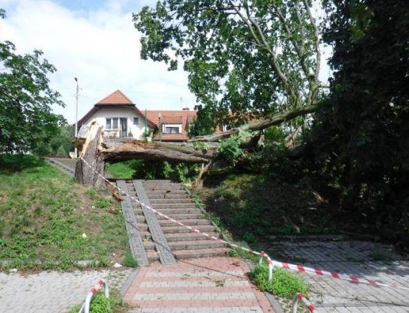 Krynica Morska: Burza nad miastem. Powalone drzewa, uszkodzone pojazdy