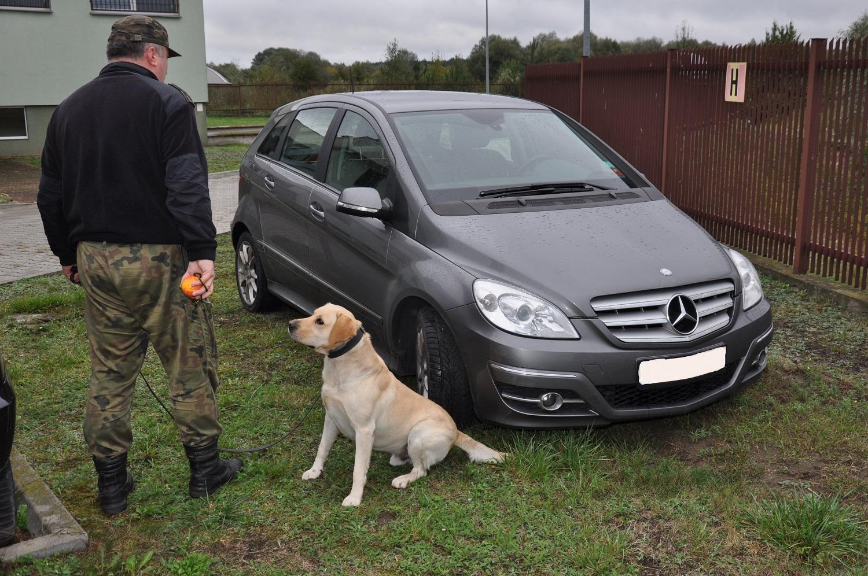 Pies  BOLO  wywęszył haszysz o wartości prawie 3 mln zł