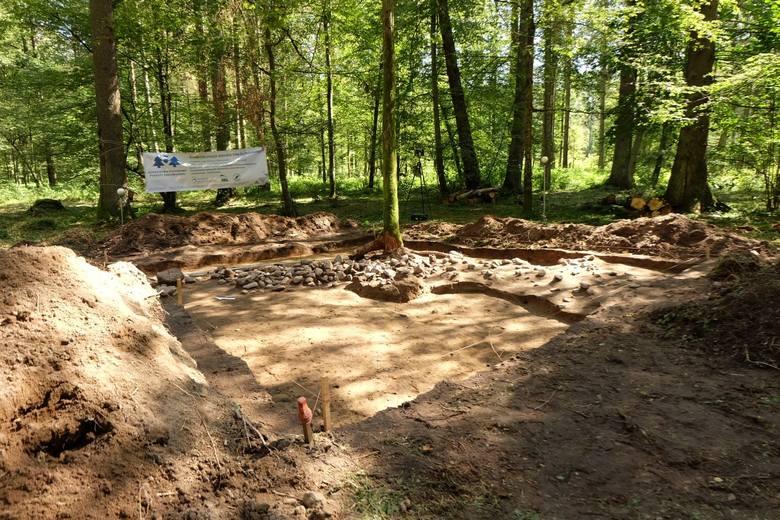 W Puszczy Białowieskiej odkryto unikat w skali krajowej