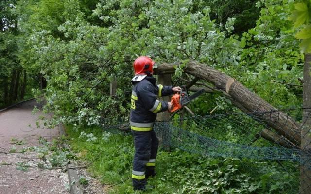 Silny wiatr na Pomorzu: Powalone drzewa i uszkodzone dachy
