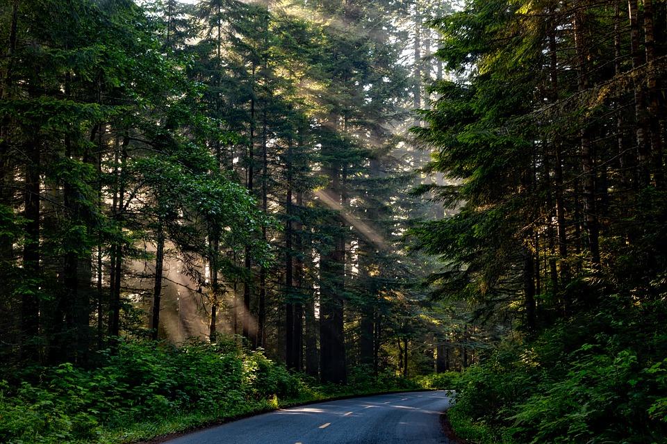 Wolsztyn: Leśniczy znalazł w lesie zwłoki. Ciało było rozszarpane