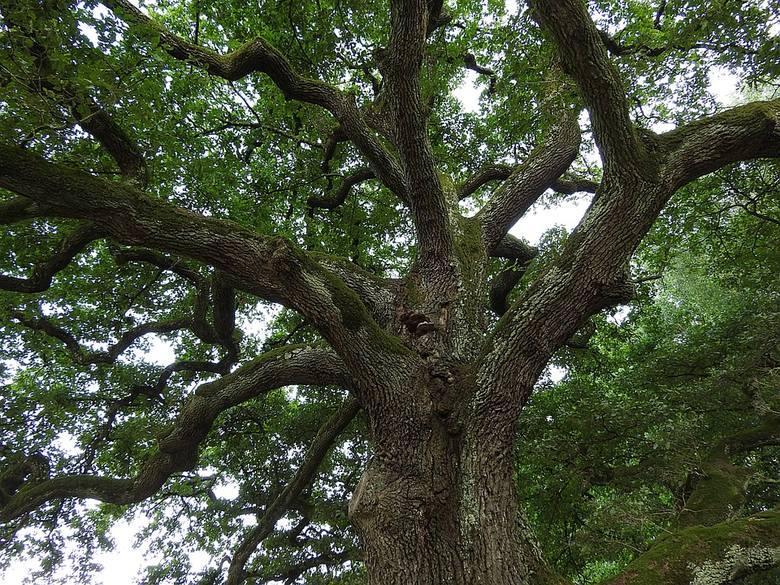 Miasto wprowadza karę 25 tys. dolarów za wycinkę dużych drzew