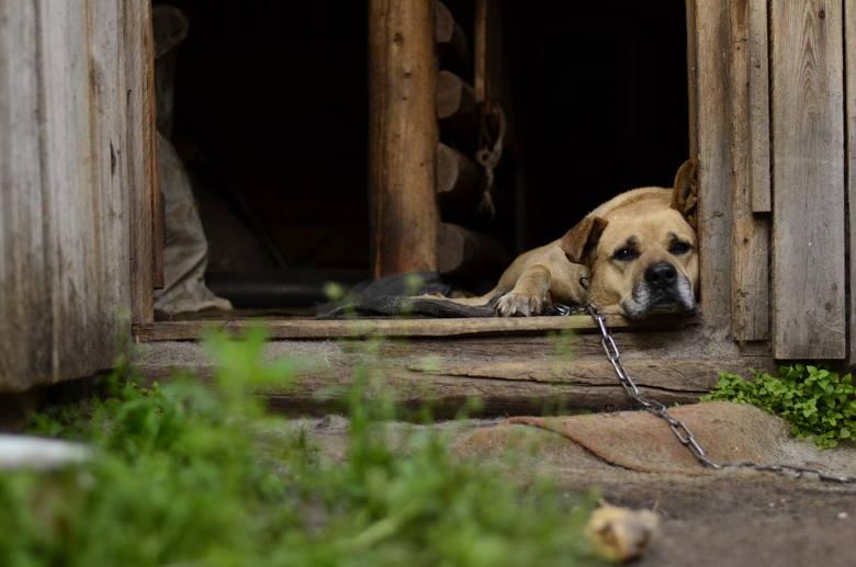 Koniec z trzymaniem psów a łańcuchach? Posłowie przygotowują nowelizację ustawy