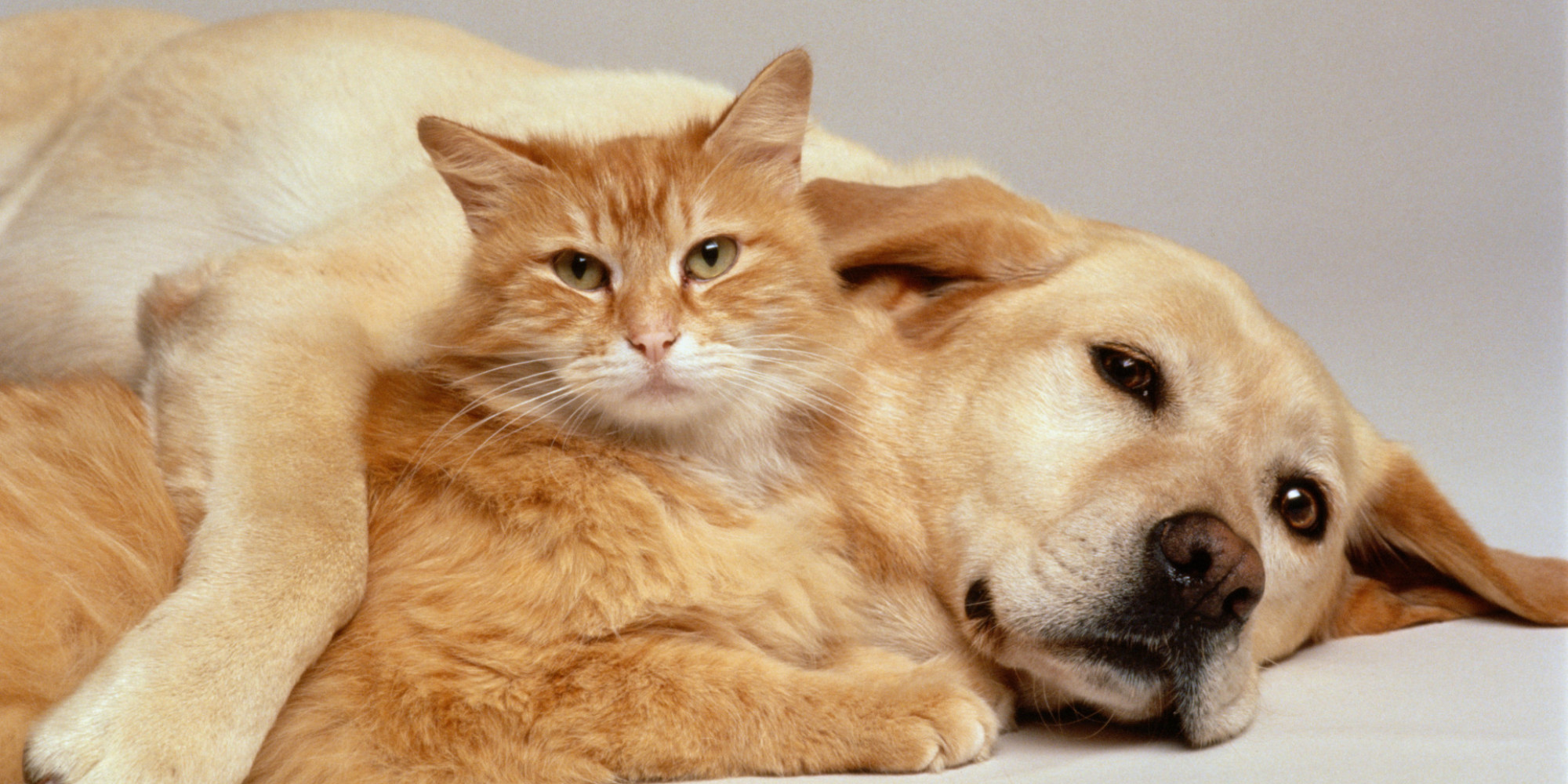 Naukowcy ustalili: Psy są mądrzejsze od kotów