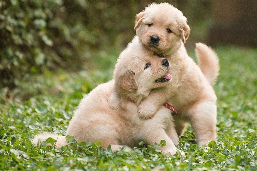 Lista najpopularniejszych imion dla psów w 2017