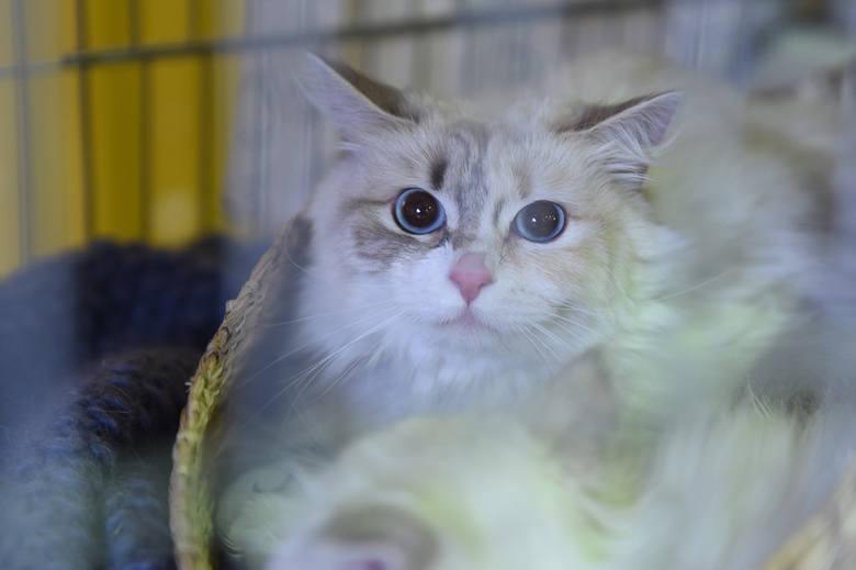 Ponad 170 kotów usuniętych z domu pod Detroit