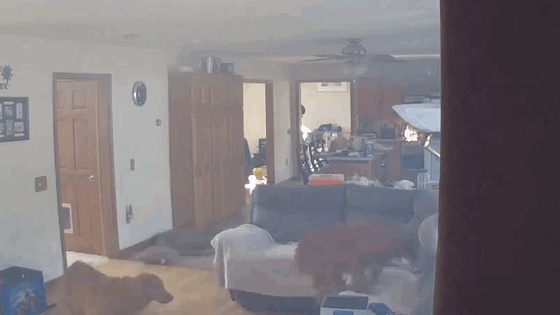 Pies ściągnął naleśniki z kuchenki i spowodował pożar (wideo)