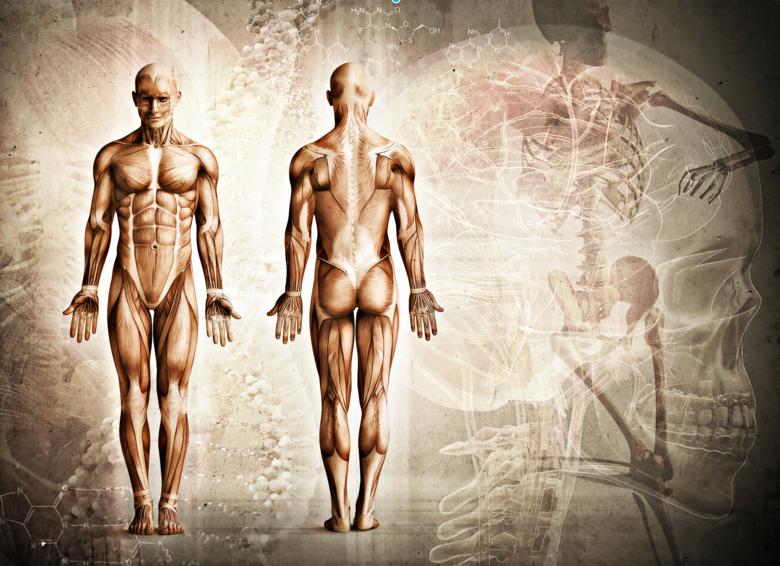 Naukowcy odkryli nowy ludzki organ. Interstitium ma powierzchnię większą niż skóra