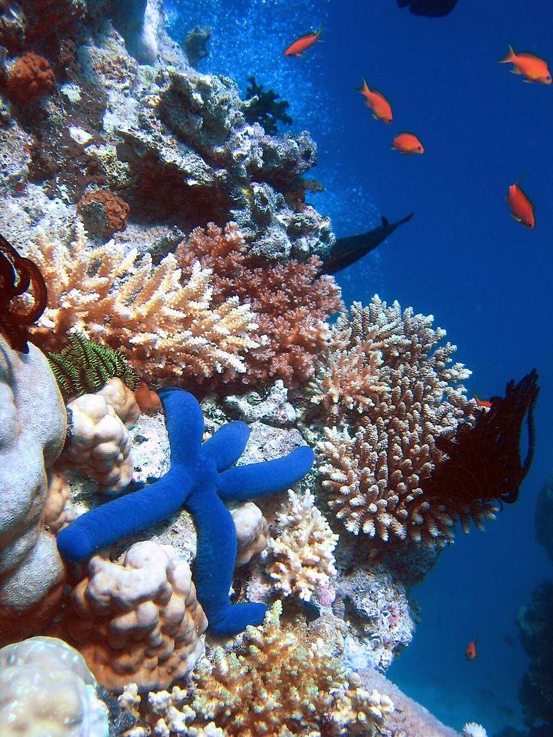 Na pomoc rafie koralowej