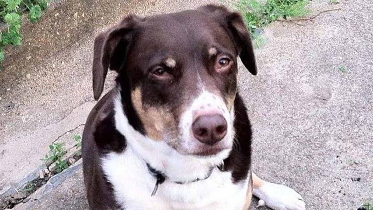 Po dwóch tygodniach w końcu właściciele odzyskali psa zatrzymanego w Niemczech