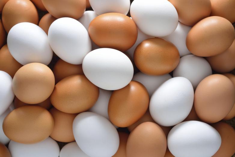 Farma z Indiany wycofuje ponad 200 milionów jajek skażonych salmonellą