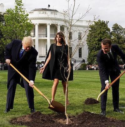 Drzewka Macrona zniknęły z trawnika przy Białym Domu