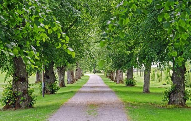 Mazowsze: Zabytkowej alei grozi wycinka. Zagrożonych jest 130 pięknych drzew