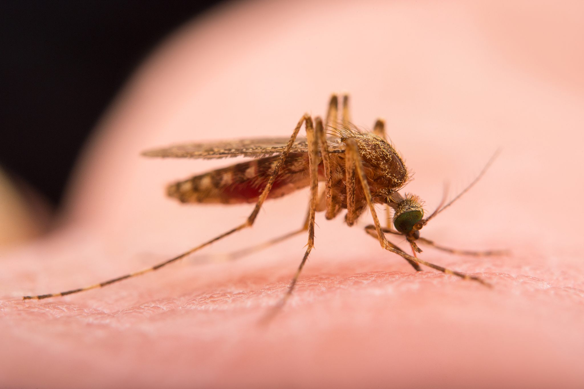 U komarów w powiecie Lake wykryto wirus Zachodniego Nilu