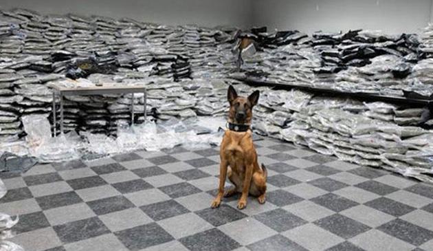 Chicagowska policja zarekwirowała 1500 funtów marihuany