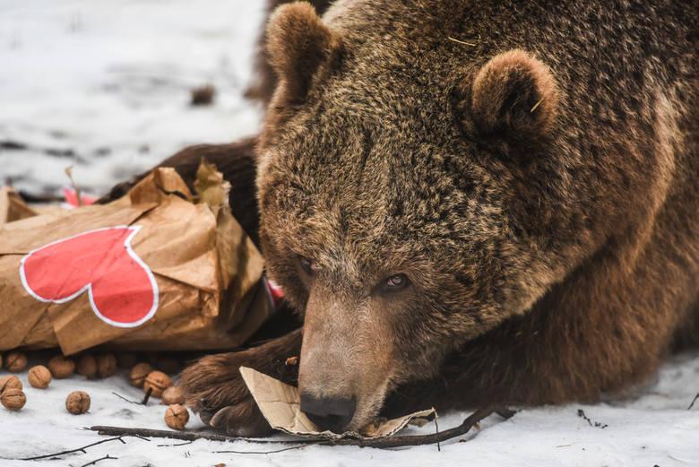 Zoo Poznań: Sąd oddalił powództwo cyrkowców. Niedźwiedź Baloo zostaje w Poznaniu