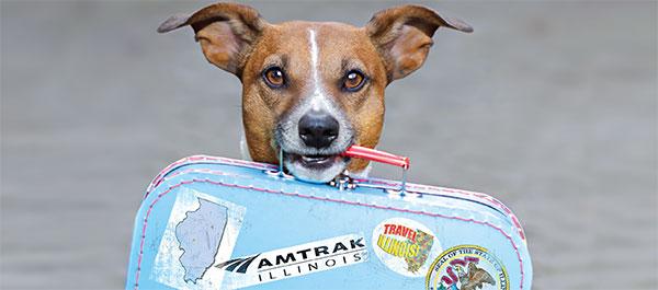 Na Środkowym Zachodzie można podróżować Amtrak z małymi zwierzętami