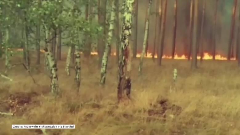 Ponad 90 procent polskich lasów jest objętych najwyższym stopniem zagrożenia pożarowego