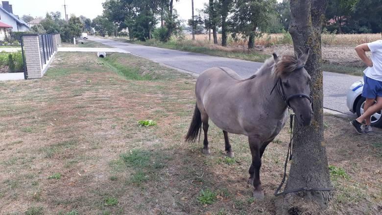 Po pijaku na… koniu. Zatrzymała go policja